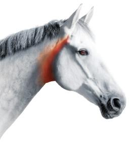 horseleft